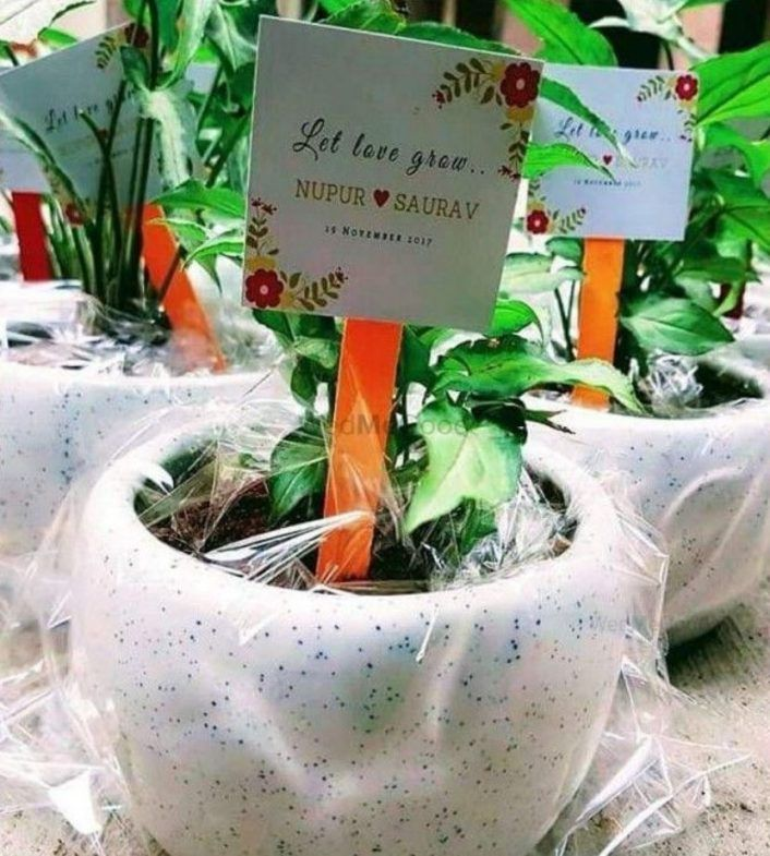 Go Eco-Friendly! Gift Potted Plants As Wedding Favors From These Top