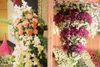Papillon Flowers
