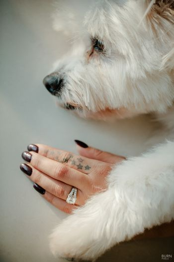 Cute engagement ring shot with brides dog