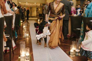 Photo of doggys bride entrance