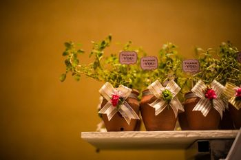 Wedding favour thank you gift plants with note