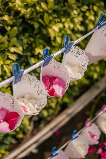 Flower petals in cones for guests to throw