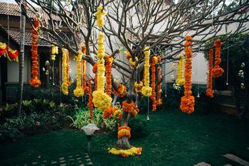 Photo of genda flower balls hanging from trees
