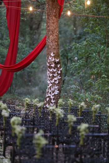 Photo of forest settings for Indian wedding