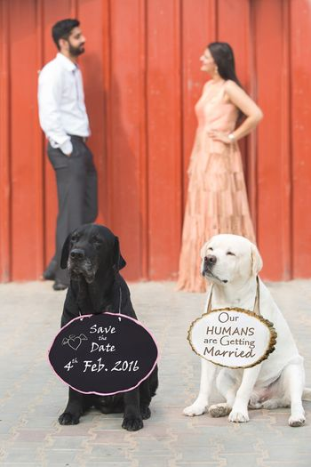 Save the date with his and her pet dogs