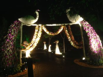 peacock entrance decor