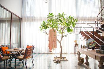 beige coloured sherwani hanging on indoor tree