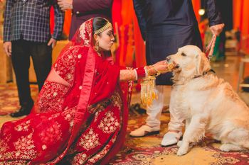 Photo of bride with her dog on her wedding day bidaai