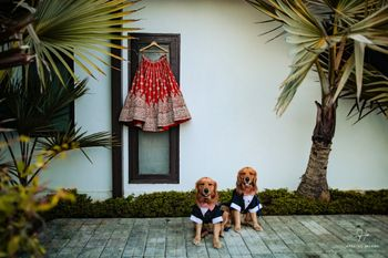 Red lehenga hanging shot with dogs