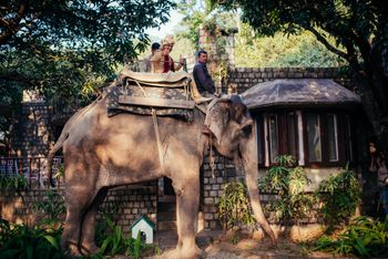 Groom entering on an elephant for forest wedding
