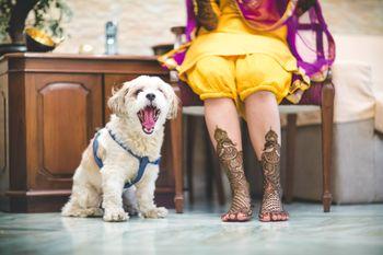 Photo of Bride with pet dog on mehendi