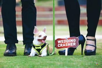 Cute couple shot with dog as wedding crasher