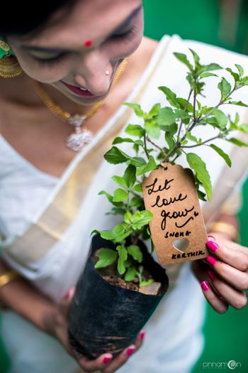 Unique favour idea plant sapling for wedding