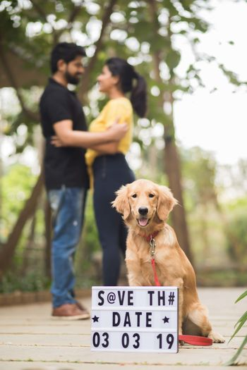 Save the date idea with dog and light box