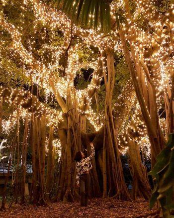 Fairytale theme decor with fairy lights