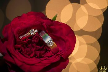 Engagement Rings on Red Rose