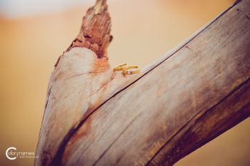 Engagement Rings on Wooden Bark