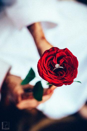 Engagement Diamond Ring on a Rose Shot