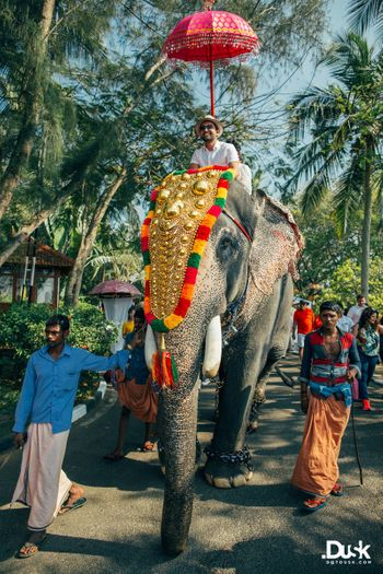 Photo of Groom entering on an elephant for Kerala wedding