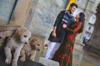 Photo of pre-wedding shoot with dogs