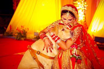Bride with Pet Shot