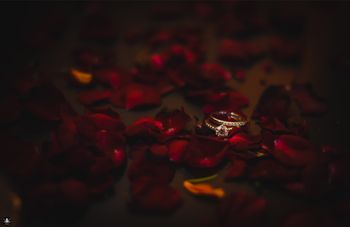 Photo of His and Her Engagement Rings with Rose Petals