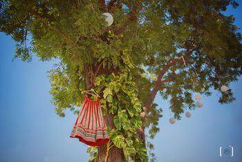 Lehenga on Hanger High Up on the Tree