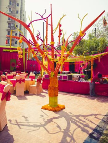 Photo of Genda Phool Tree and Branches in Decor