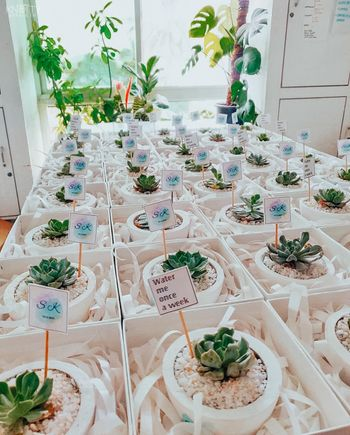 Succulents as favours for guests.