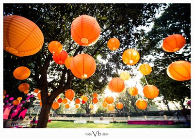Photo of paper lanterns hung from trees on day mehendi