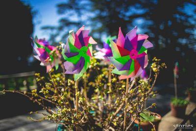 Photo of paper pinwheel props