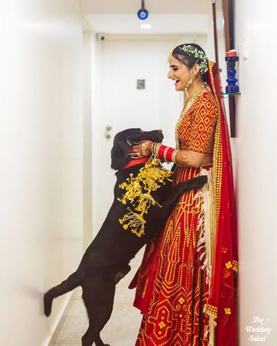 Photo of bride wearing kaleere with her dog