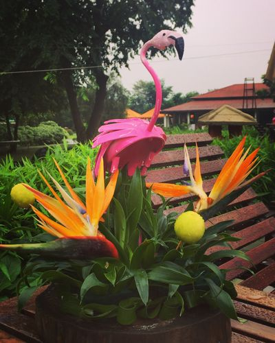 Photo of Tropical theme decor with flamingo prop
