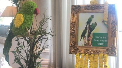 The obsession with Parrot